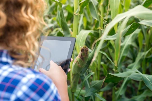 Mädchenbauer mit tablette, die im maisfeld unter verwendung des internets steht und einen bericht sendet.