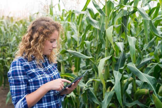 Mädchenbauer mit tablette, die im maisfeld unter verwendung des internets steht und einen bericht sendet
