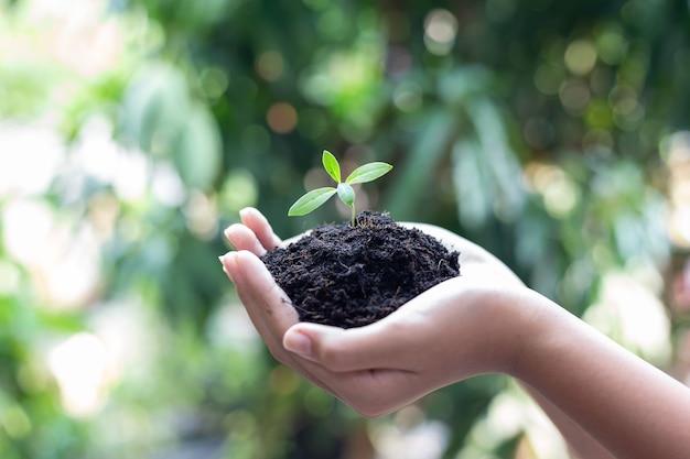 Mädchenhand, die jungen baum für vorbereitende pflanze auf boden hält