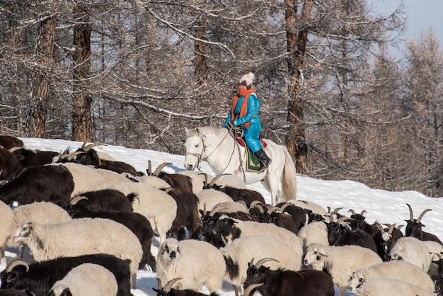 Mädchenhirte, der auf pferd sitzt und schafherde im grasland mit schneebedeckten bergen auf hintergrund hütet