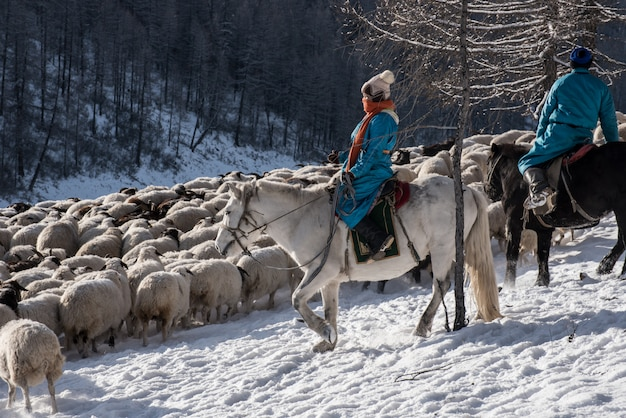 Mädchenhirte, der auf pferd sitzt und schafherde im grasland mit schneebedeckten bergen hütet