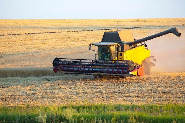 Mähdrescher erntet weizen auf dem feld. agrar- und getreideindustrie