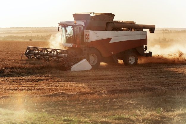 Mähdrescher erntet weizen konzept einer reichen ernte landwirtschaftsbild