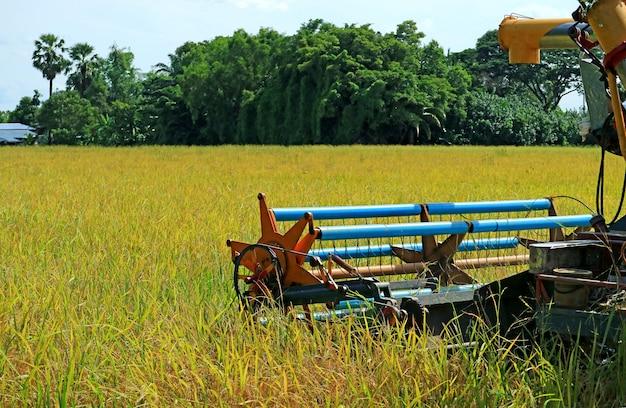 Mähdrescher-maschine, die reife reispflanzen im goldenen paddy field, zentrales thailand erntet