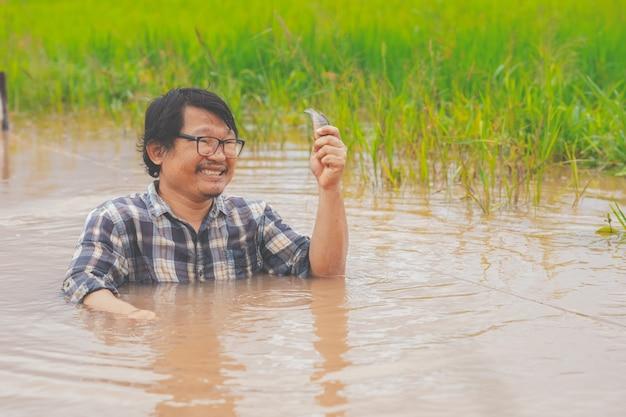 Männer bauer fangen fische im hochwasser im reisfeld