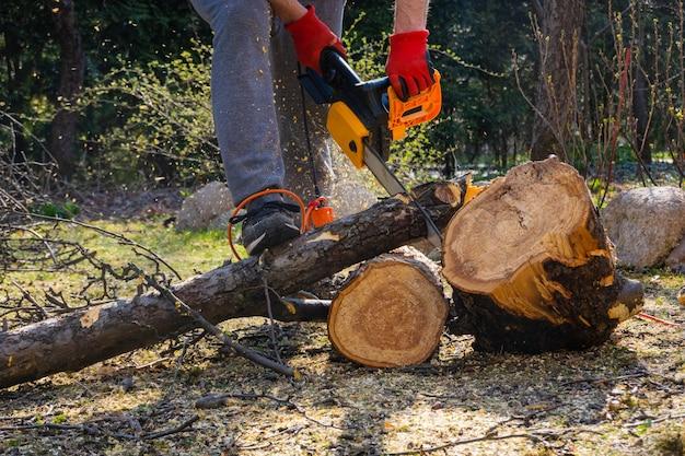 Männer sägen apfelbaum mit einer kettensäge in seinem hinterhof.
