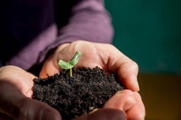 Männliche hände, die junge pflanze halten. ökologiekonzept. hände, die boden mit jungem baum halten. tag der erde. sämlinge wachsen im boden. pflanzen von bäumen, um die globale erwärmung zu verringern. neue sämlinge sprießen aus dem boden