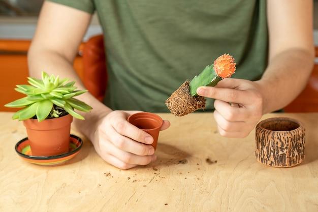 Männliche hände verpflanzen einen kaktus in einen neuen topf.