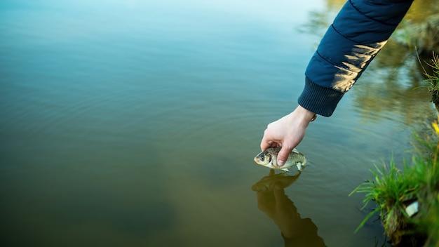 Männliche hand, die einen fisch über der oberfläche des wassers hält