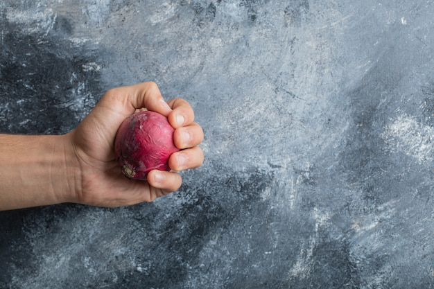 Männliche hand, die einzelne rote zwiebel auf marmorhintergrund hält