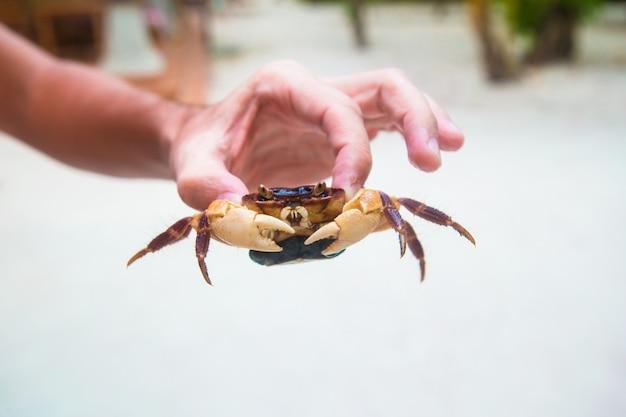 Männliche hand, die große livekrabbe am weißen strand hält