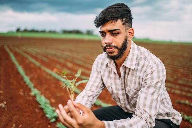 Männliche landarbeiterhand, die grüne frische reife bio-erdnuss erntet.