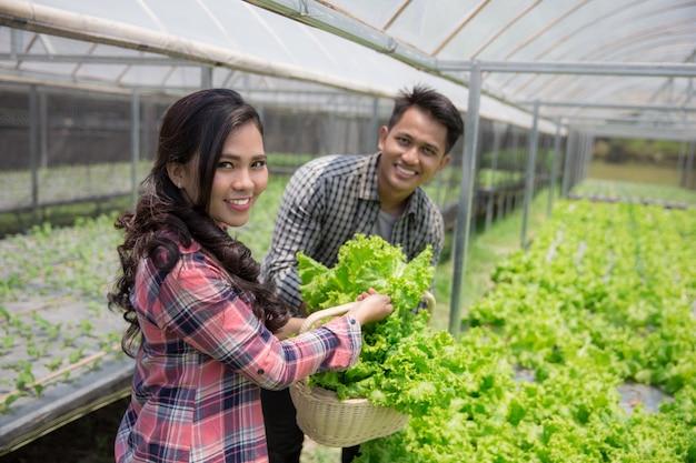 Männliche und weibliche ernte von einer hydrophonen farm