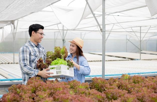 Männliche und weibliche gärtner sammeln bio-gemüse, das auf der hydroponics-gemüsefarm geerntet wurde