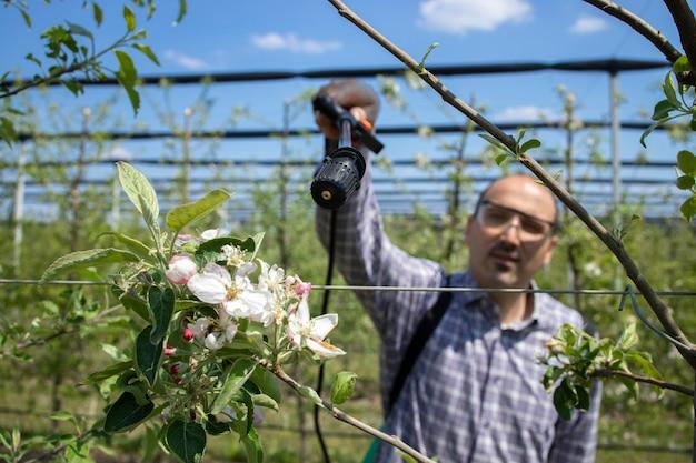Männlicher agronom, der apfelbäume mit pestiziden im obstgarten behandelt