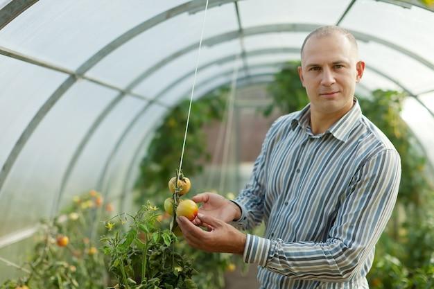 Männlicher bauer sieht tomatenpflanze aus