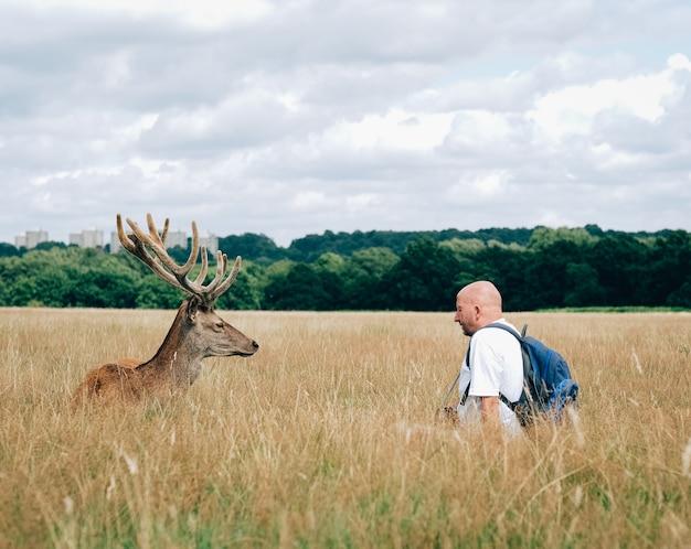 Männlicher elch, der vor einem mann mit einem rucksack steht