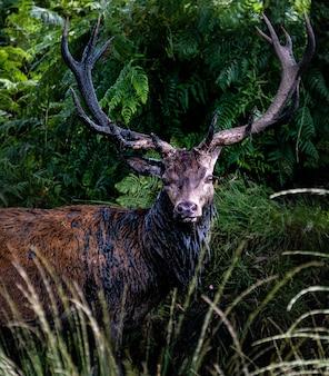 Männlicher elch, umgeben von gras und bäumen während des tages