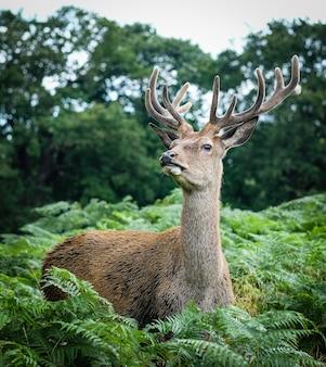 Männlicher elch, umgeben von gras und bäumen