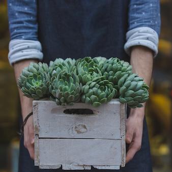 Männlicher florist, der einen hölzernen korb von suculentus hält