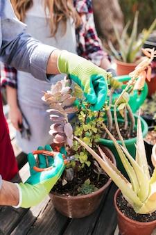 Männlicher gärtner, der die topfpflanze mit scheren im garten schneidet
