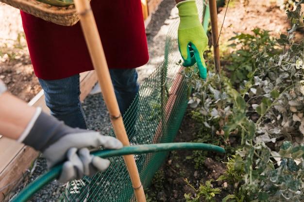 Männlicher gärtner, der ihren freund führt, um die anlage mit schlauch zu wässern