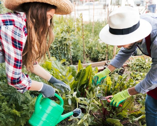 Männlicher und weiblicher gärtner, der die anlagen im garten beschneidet und wässert