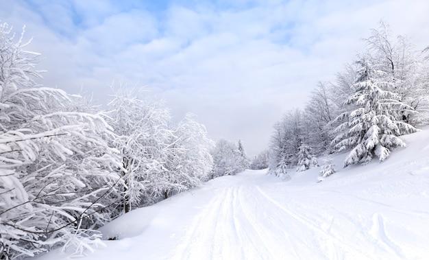 Magische morgendämmerung im wald nahe der spitze des berges.