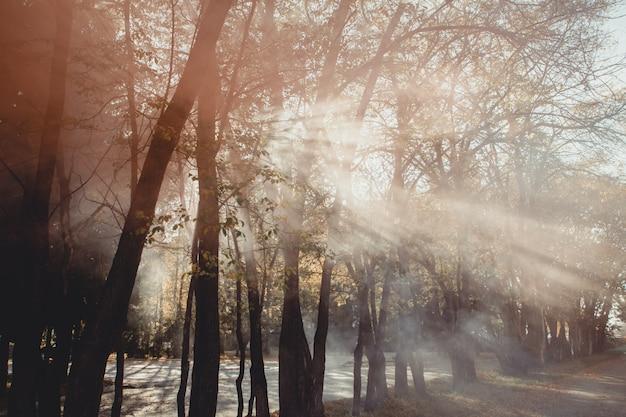 Magischer alter baum mit sonnenstrahlen morgens. erstaunlicher wald im nebel.