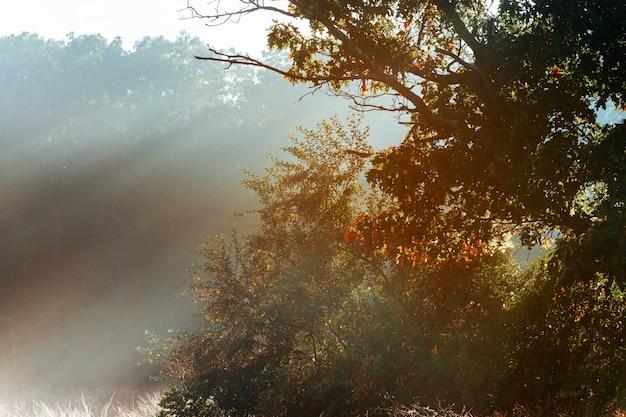 Magischer baum mit sonnenstrahlen morgens.