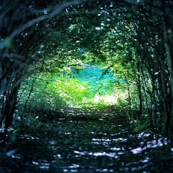 Magischer blauer wald mit weg zum licht durch einen dunklen baumtunnel