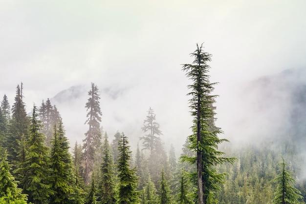 Magischer nebelwald. schöne naturlandschaften.