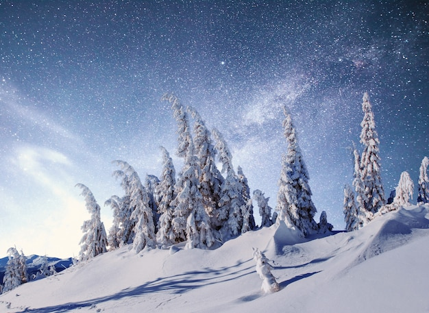 Magischer winter schneebedeckter baum. winterlandschaft.