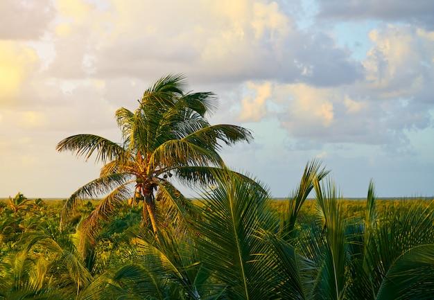 Mahahual karibischer palmendschungel