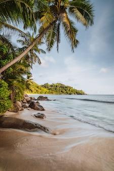 Mahe island, seychellen. urlaubsberufung am wunderschönen tropischen strand anse intendance. kokospalmen und meereswellen, die zum ufer rollen.