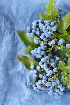 Mahonia aquifolium. mahonia beeren und blätter auf blauem zerknittertem papier