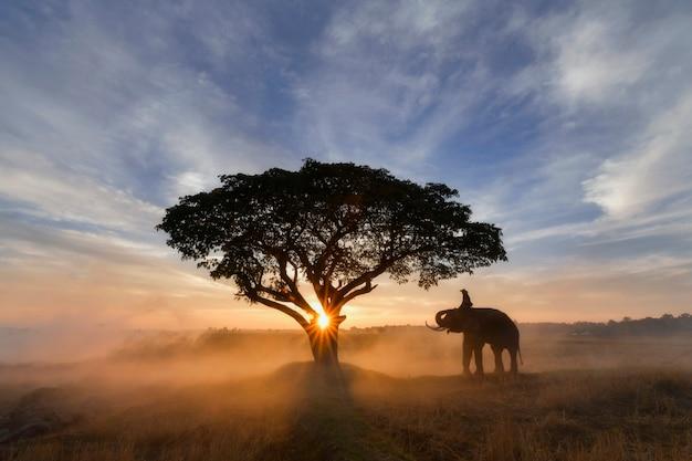 Mahouts und elefanten auf dem feld während des sonnenaufgangs