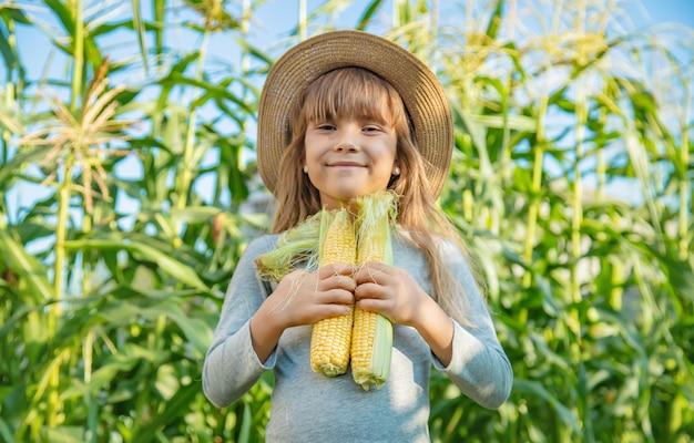 Mais auf dem feld in den händen eines kindes