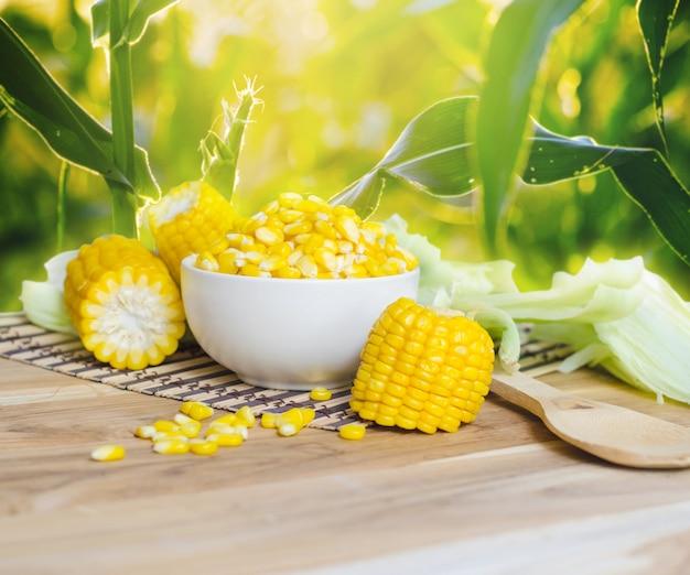 Mais auf tabelle gegen maisfeld