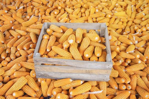 Mais für die verarbeitung zu futter