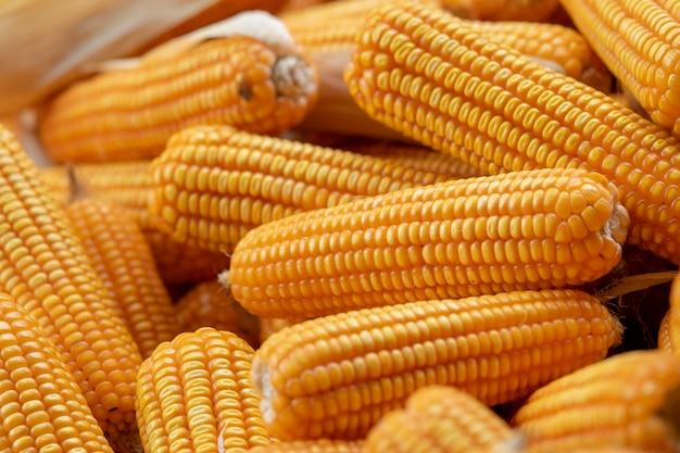 Mais oder mais zur verarbeitung zu gelbem futter. nahaufnahme rahmen.