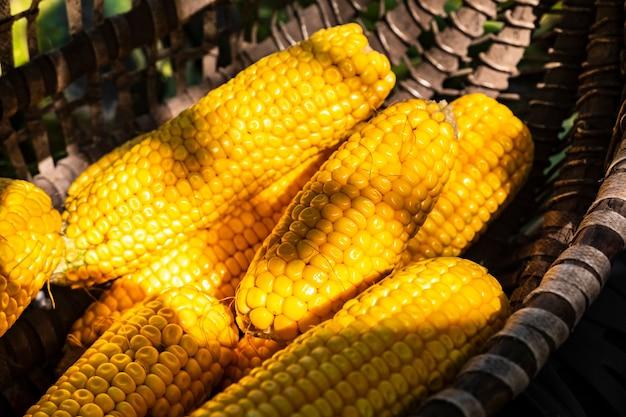 Mais wird in körben und kisten auf dem hinterhof oder auf einem landwirtschaftlichen bauernhof in der sonne geerntet und getrocknet. weicher fokus. getreide als künstlerisches mittel. nahansicht. draußen.