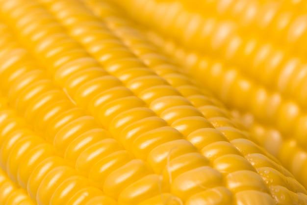 Maisbeschaffenheitshintergrund, frischer organischer mais