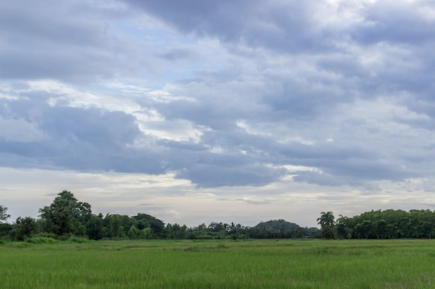 Maisfeld mit himmel und wolken nach regen