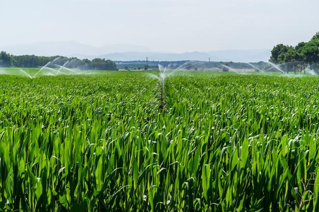 Maisfelder im radweg von llagostera werden bewässert.