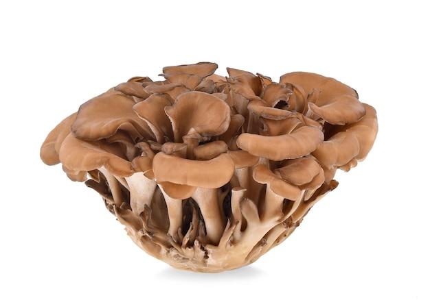 Maitake-pilze lokalisiert auf weiß