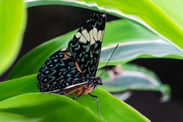 Majestätischer bunter schmetterling im natürlichen lebensraum