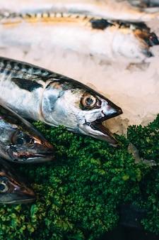Makrele auf eis zu verkaufen