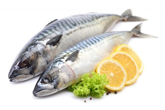 Makrelenfisch auf weiß