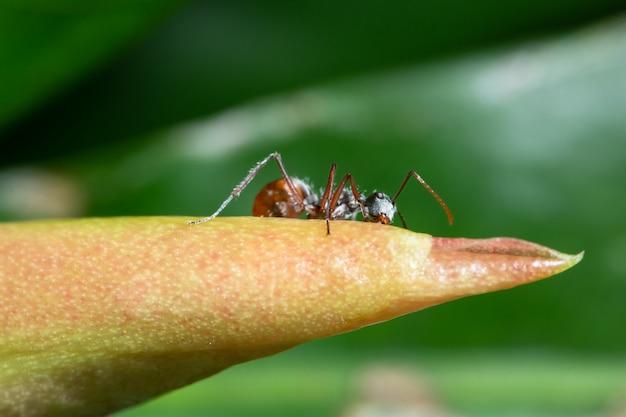 Makro ameisen auf pflanzen